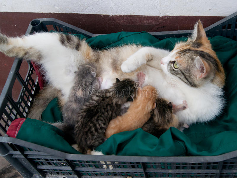 Small cats suck stock photo