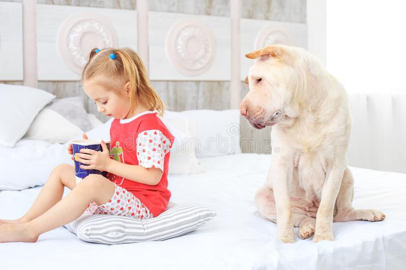 A small child eating in pajamas. The dog is hungry. The concept stock photography