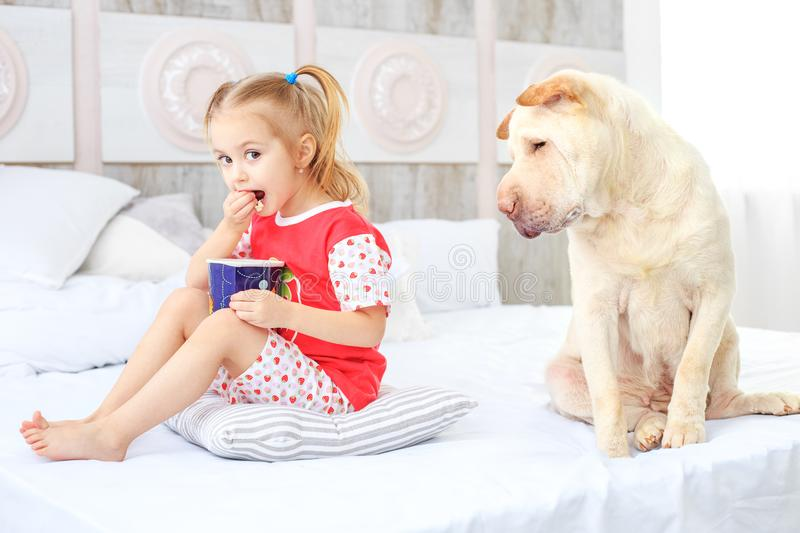 A small child eating popcorn. The dog is hungry. The concept is royalty free stock photos