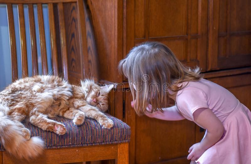 Small child in pink,   approaches a sleeping cat stock image