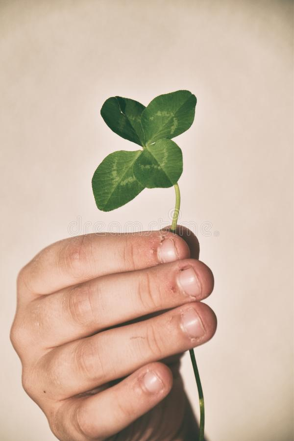 L child`s hand holding a four-leaf clover on his fingers on a sm stock photography