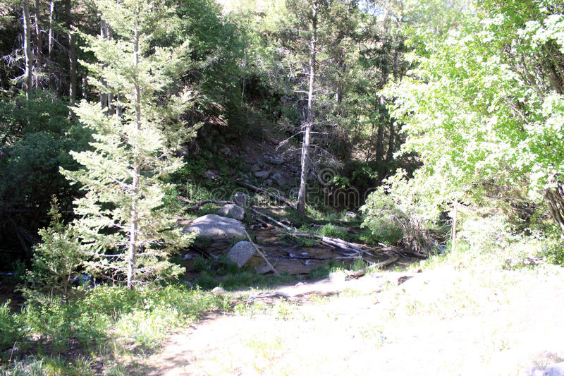 A Small Clearing in the Forest. Allows a resting place royalty free stock photos