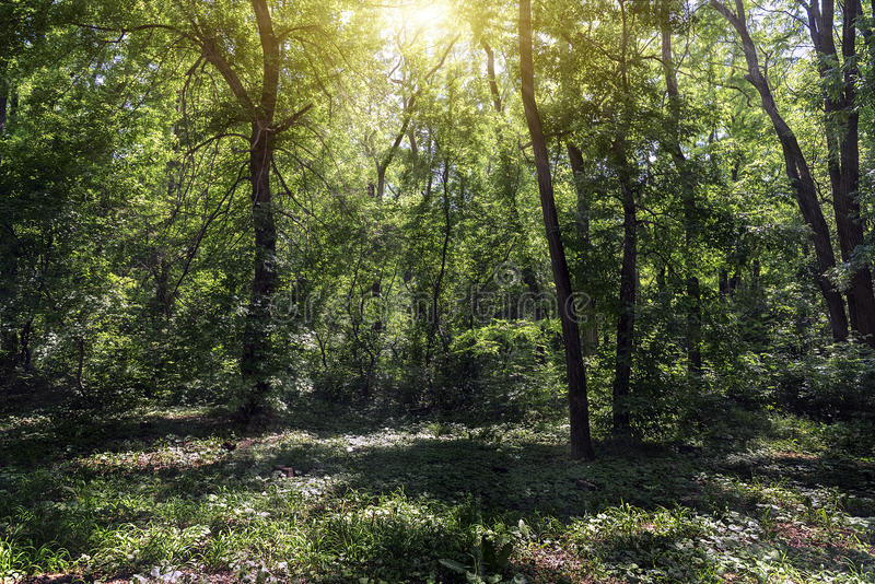 Small clearing in the forest lit by the sun stock images