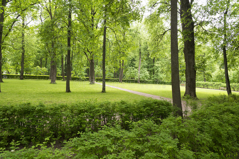 A small clearing with trees and lawn. A small clearing with trees and lawn in the Park royalty free stock photo