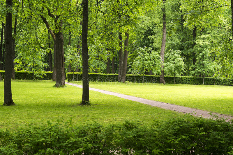 A small clearing with trees and lawn. A small clearing with trees and lawn in the Park royalty free stock photography