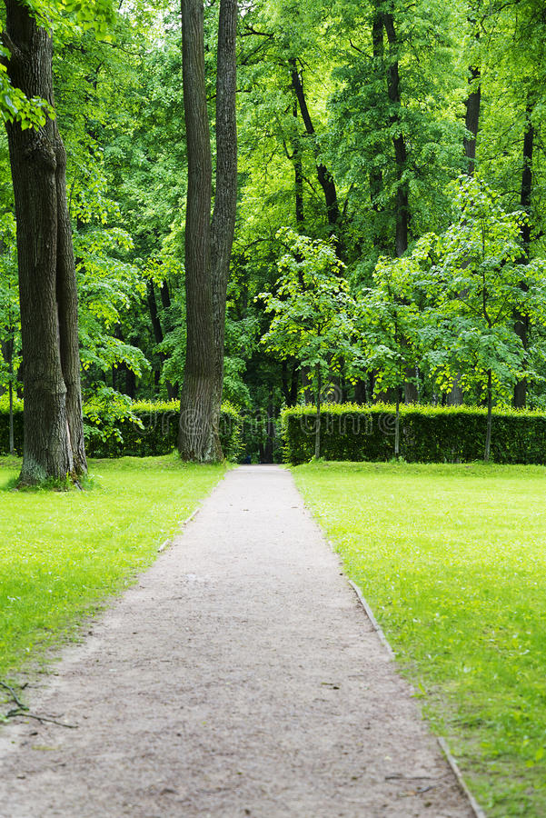 A small clearing with trees, lawn and path. A small clearing with trees, lawn and path in Park stock image