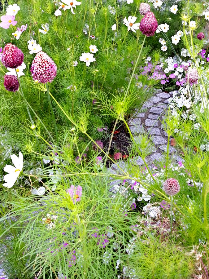 Small pathway surrounded by flowers royalty free stock photos