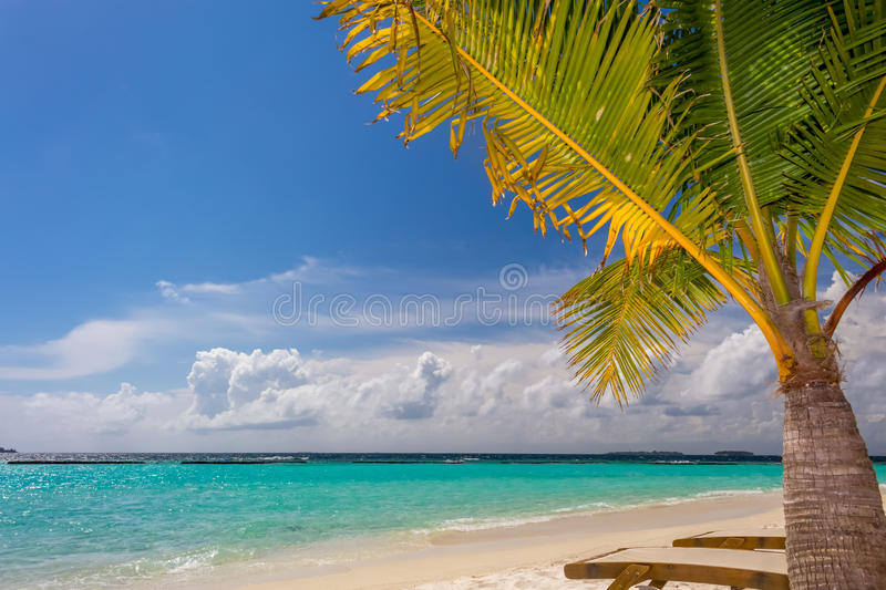 Small coconut palm tree at dreamy tropical beach stock photography