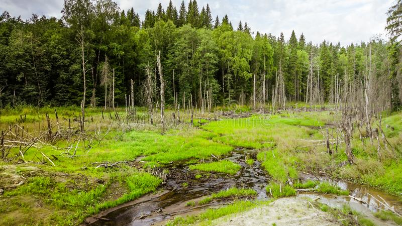 Small cold stream in the Karelia republic royalty free stock photography