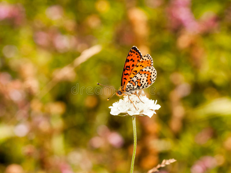 Small, colorful, beautiful butterfly on a flower stock photos
