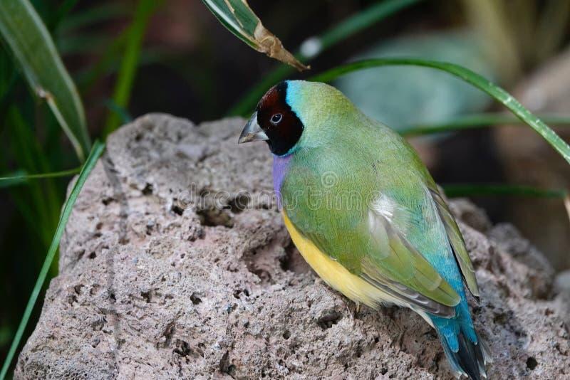 Colorful bird. stock image