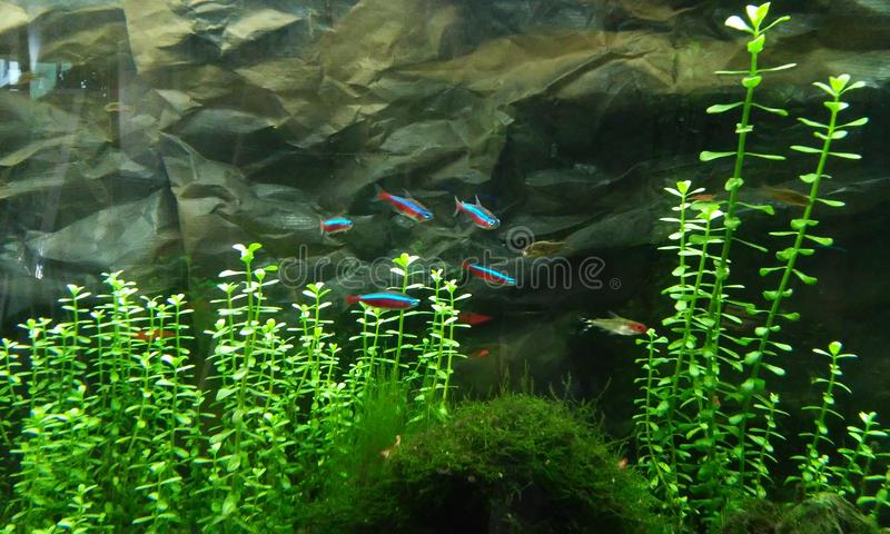 Small colorful fishes. Water, sea stock images