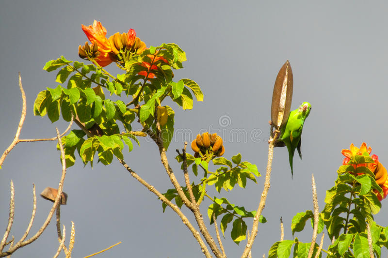 Small colorful green parrot on tree with flowers stock photos