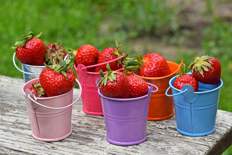 Small colorful toy buckets full of red strawberry. Several small colorful multicolored metal toy buckets full of red mellow strawberries on old vintage wooden stock photography