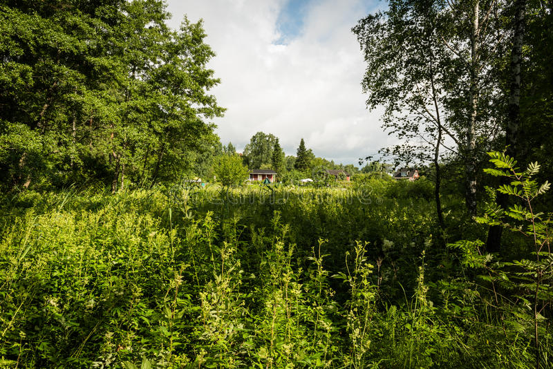 Small cottages in the forest clearing. On a sunny day royalty free stock images