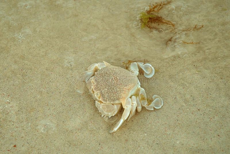 A small crab on the bottom of the sea stock photography