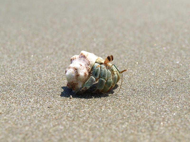 Small crab in his shell stock photography