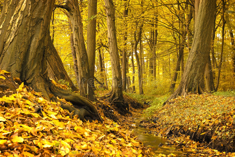 Download Small creek stock photo. Image of creek, yellow, colorful - 21861366