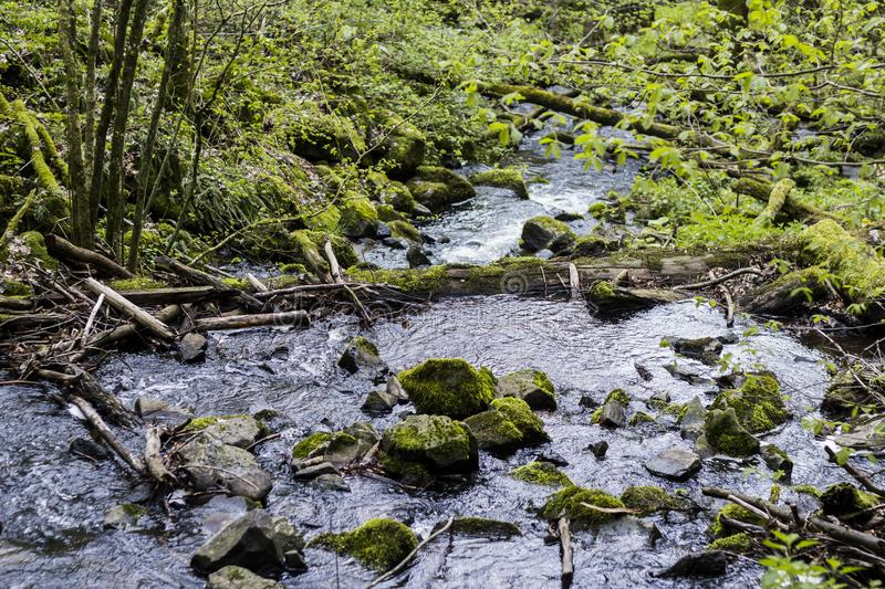 Small creek flows through a green forest royalty free stock photo