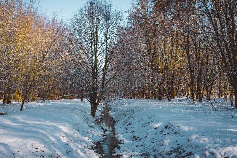 Small Creek and Walking Path Through Winter Forest royalty free stock photo