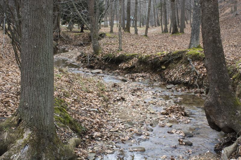 Stream in the forest in winter stock image