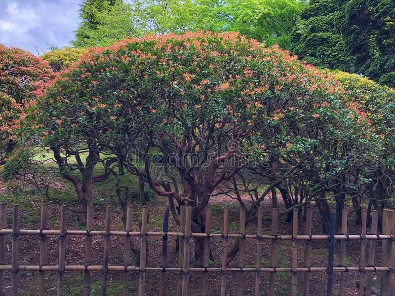 The small crown tree in the park.  royalty free stock image