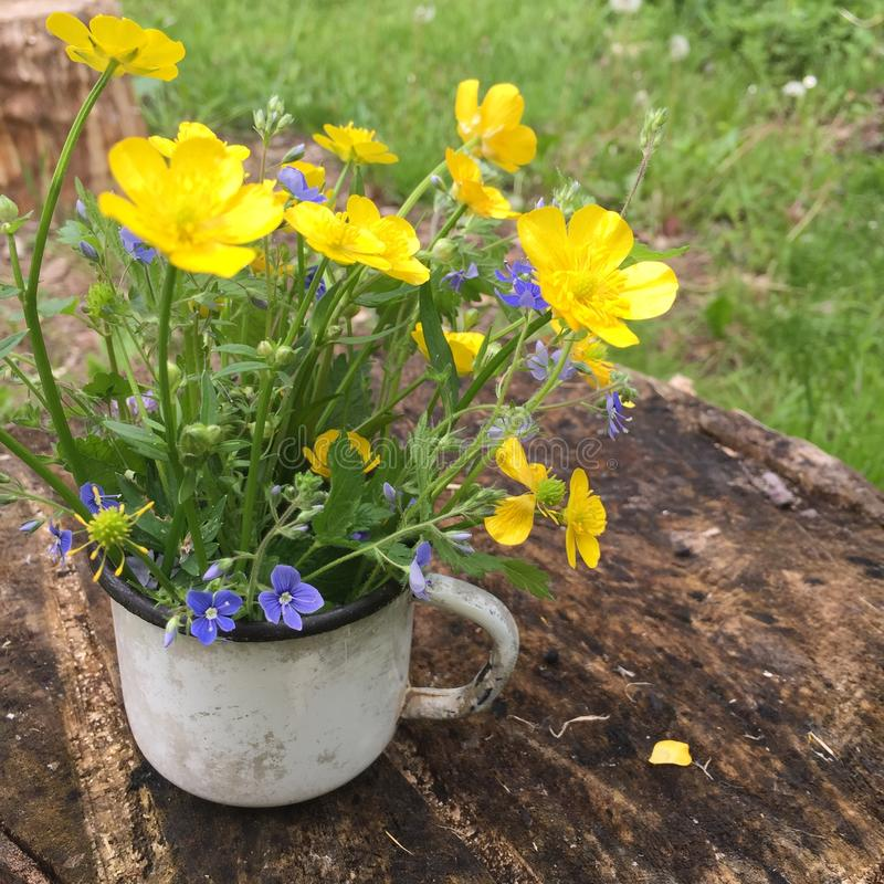 Small cute bouquet of wildflowers in an old enameled mug. Old white enamel mug with cute small bouquet of buttercups flowers stands on a birch stump royalty free stock photography