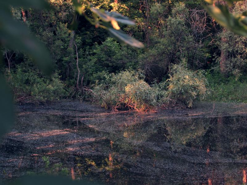 A small dark dark mysterious fairy forest lake with mud and bright orange tree roots. A small dark dark mysterious fairy forest lake with mud and bright colorful royalty free stock images