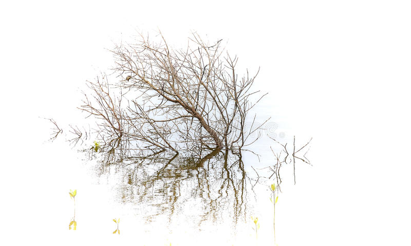 Small Dead Tree In the Water royalty free stock photography