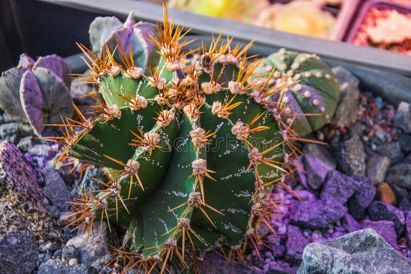 Small decorative cactus plants, desert garden arranged.  royalty free stock photos