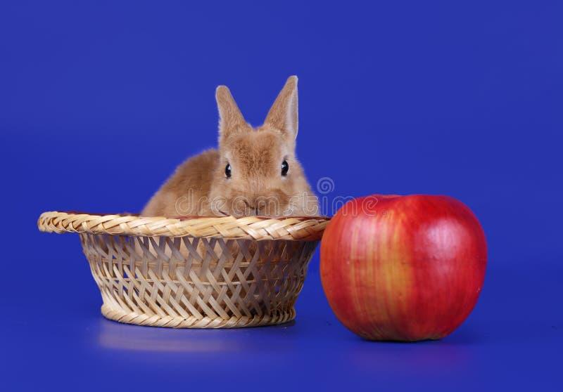 Small decorative rabbit royalty free stock image