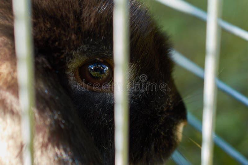 Small decorative rabbit in cage closeup stock photo