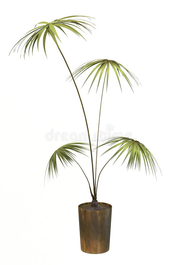 Small decorative tree. On a white background vector illustration