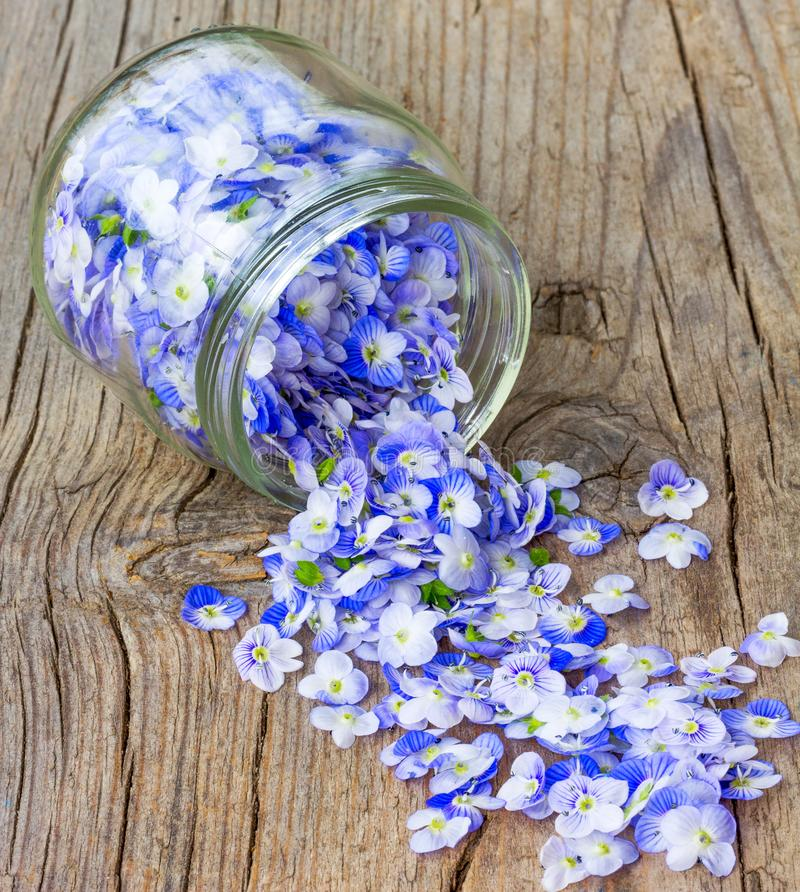 Small delicate blue petals poured from a glass jar on an old wooden. Board royalty free stock photo