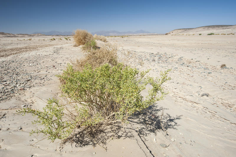 Download Small Desert Bush On A Rocky Desert Landscape Stock Photo - Image of rocky, harsh: 39505006