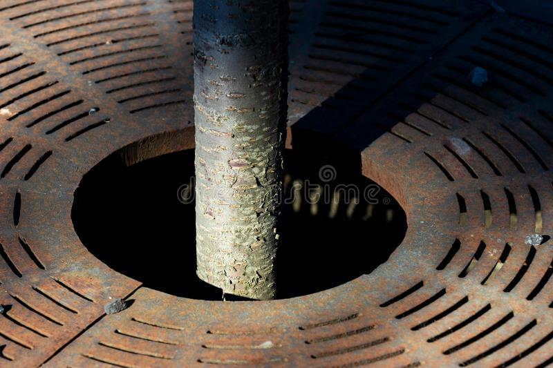 Small diameter tree trunk growing through a street grate royalty free stock images
