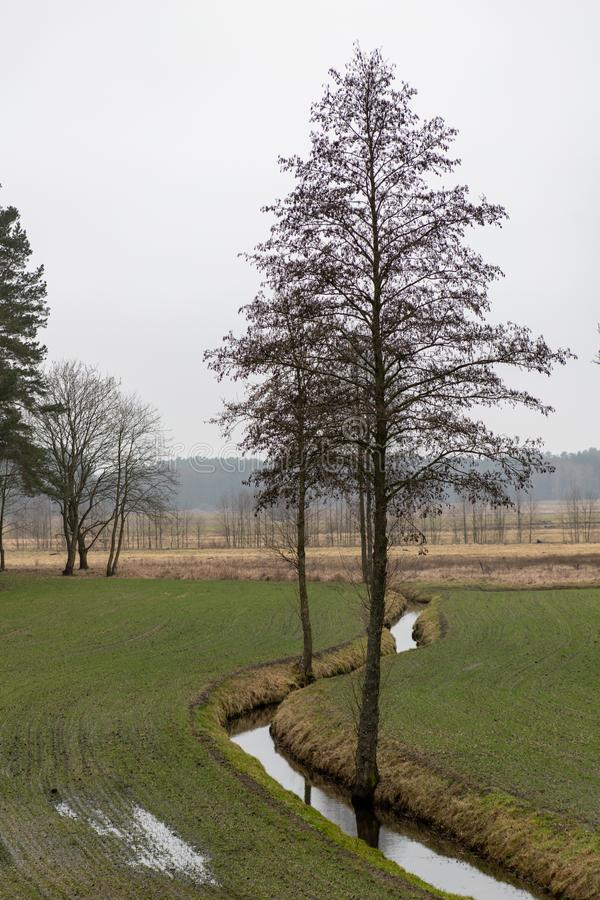 A small ditch passing through a meadow. Trees growing over a small river. Season of the spring royalty free stock photos
