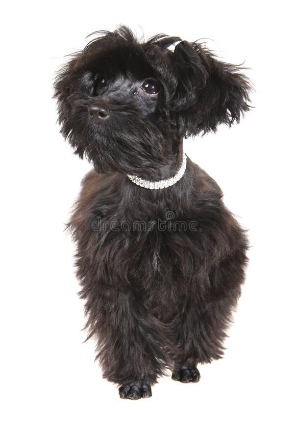 Small dog stock image