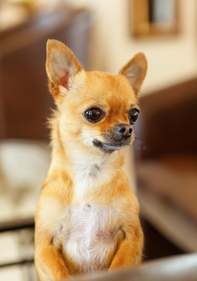 A small dog stock photography