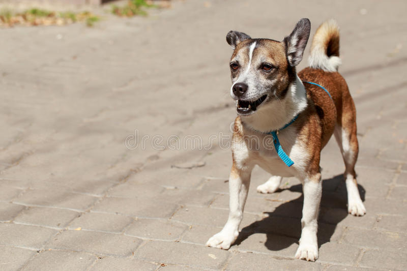 A small dog stock image