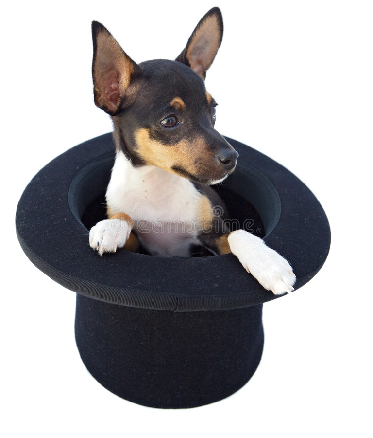 Small dog in a magician hat royalty free stock images