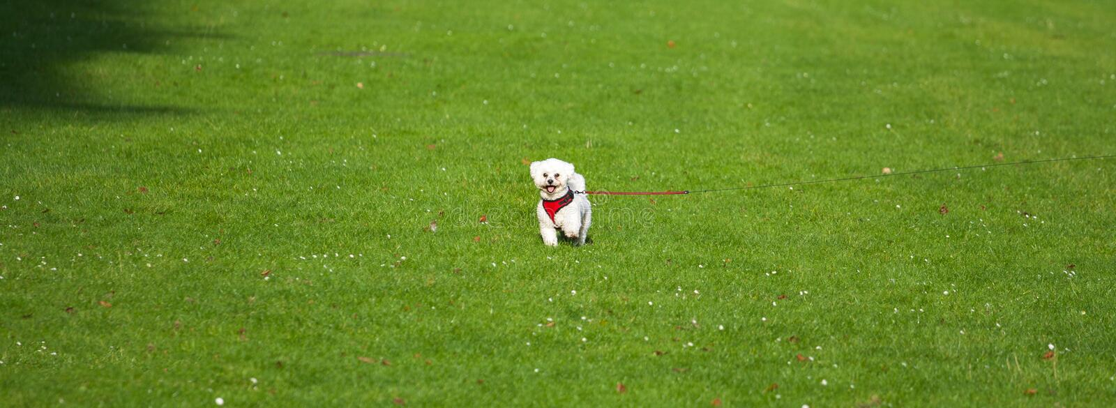 Small dog in the middle of the field stock photos