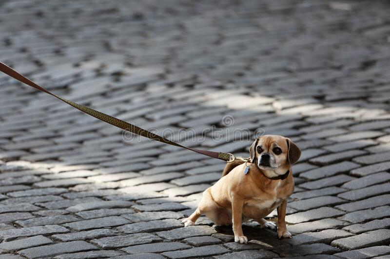 Small dog on road royalty free stock images