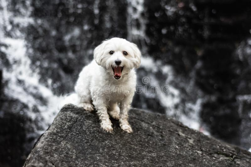 Small dog smiling infront of waterfall royalty free stock image