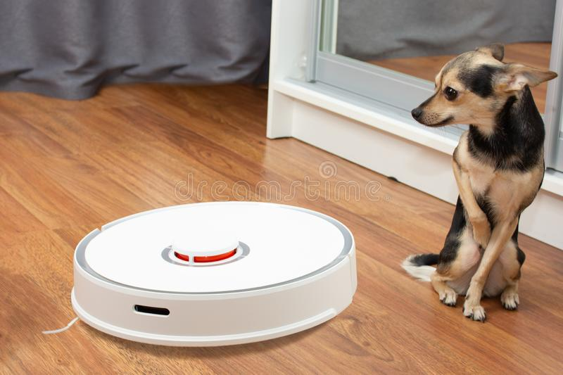 Small dog toy Terrier is afraid of the vacuum cleaner royalty free stock image