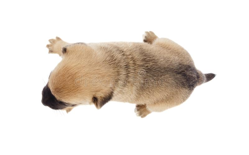 Small dog view from above. Isolated stock images