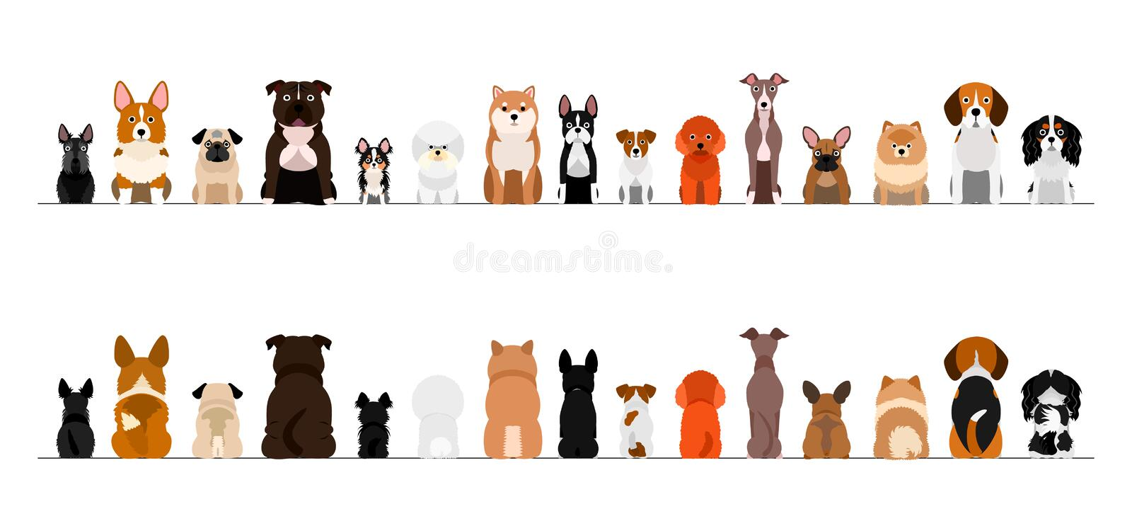 Small dogs border border set, full length, front and back. Small dogs border set, full length, front and back, sitting in front on white background stock illustration