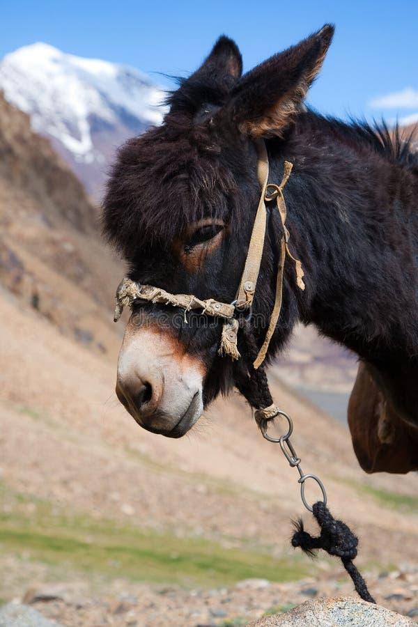 Small donkey royalty free stock photos