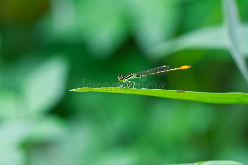 Small dragonfly stock photo