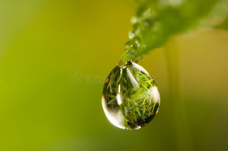 Small drop on grass stock photos